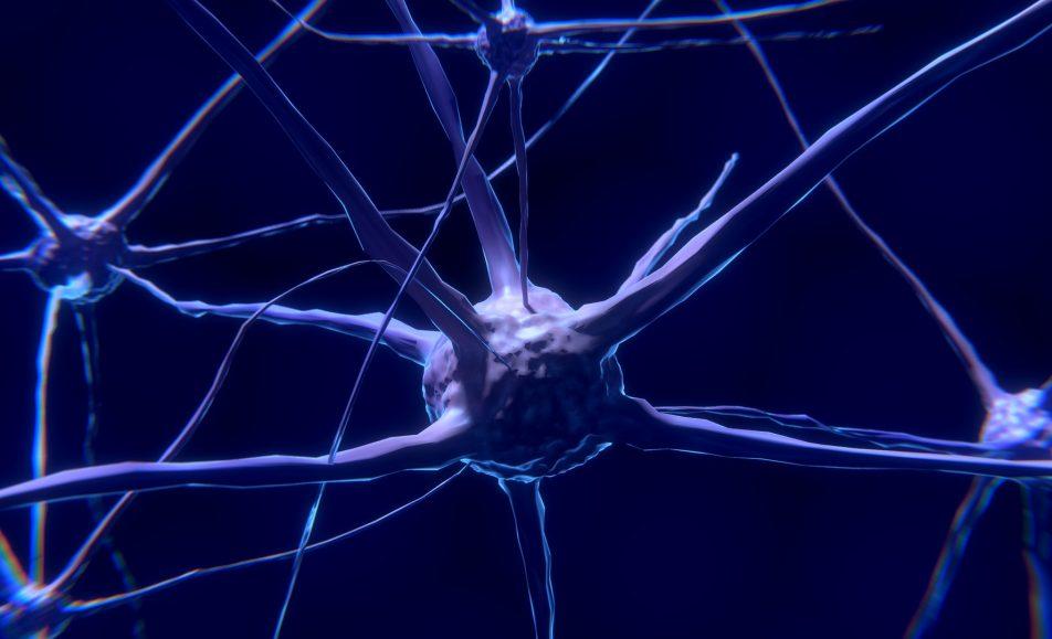 Neurogastronomía Aplicada nivel Gold