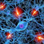 Merlin Gessen - Neurogastronomía Aplicada
